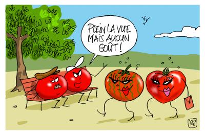 17rv154ysope_tomates.jpg